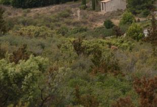 Languedoc700_5897